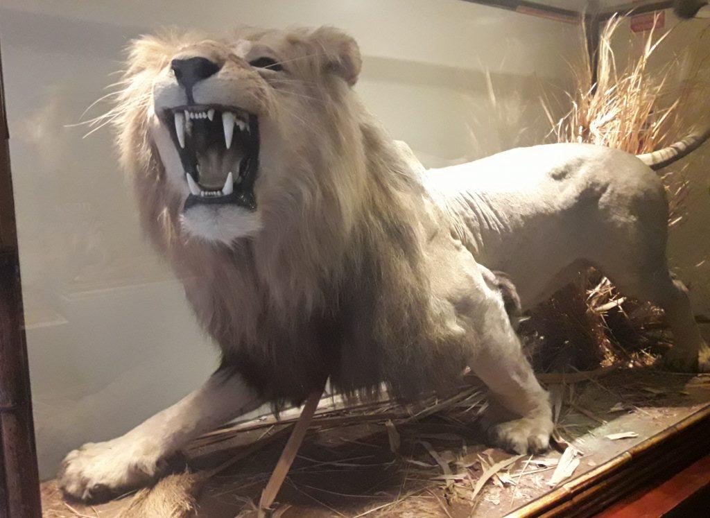 museu ciencias naturais madrid leao