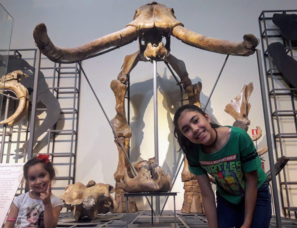 museu ciencias naturais madrid mamute