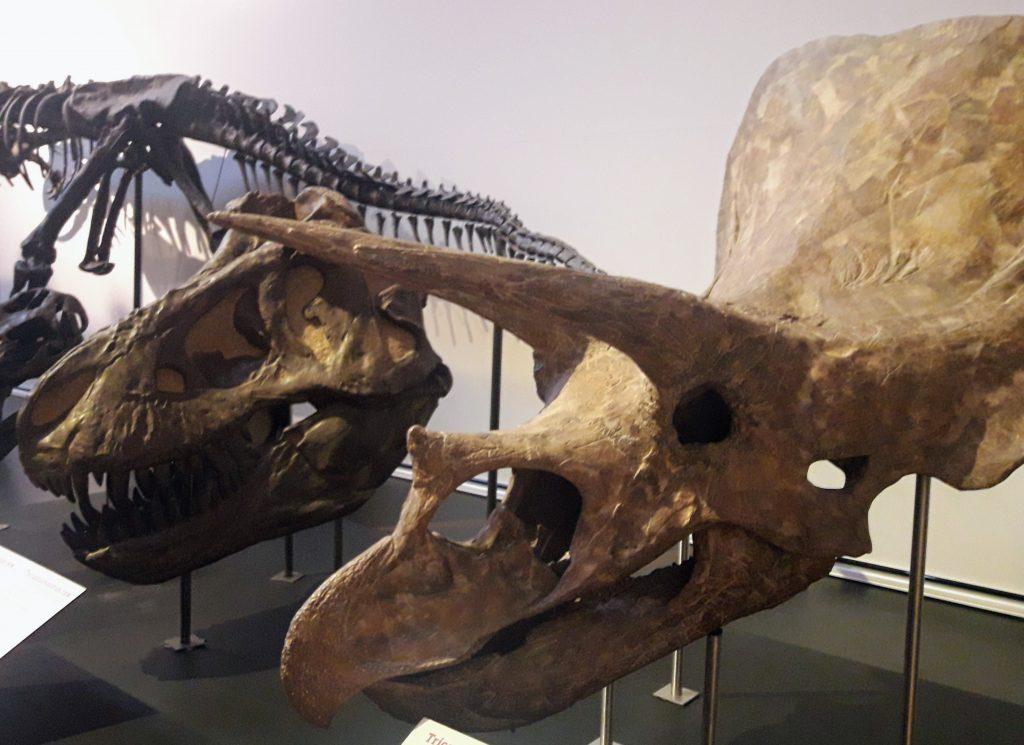 museu ciencias naturais madrid dinossauros
