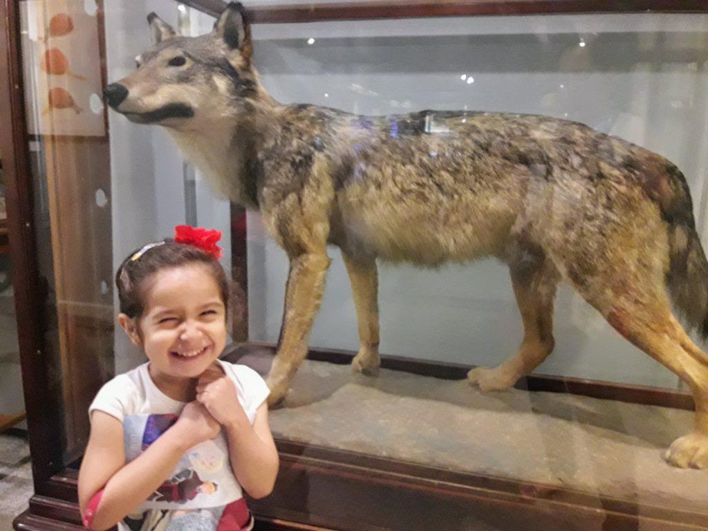 museu ciencias naturais madrid lobo